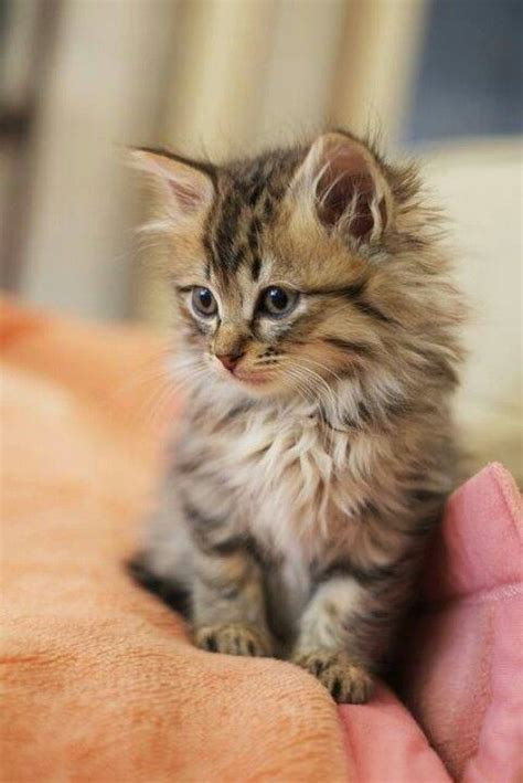 best of cat pretty animals