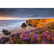 Coast Beach Flowers Sunset Sand Sea Cliff Clouds