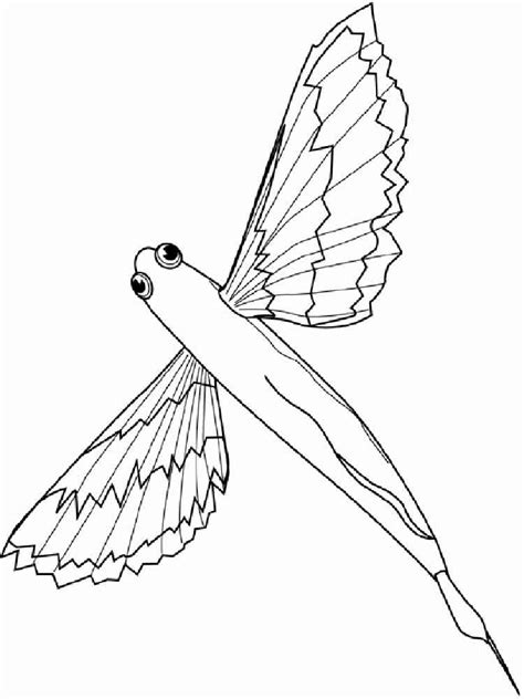 flying fish coloring pages download and print flying fish