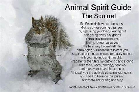 let me see you do the squirrel squirrel critters pinterest squirrel