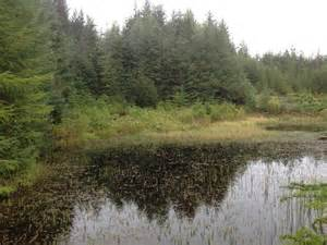 forest pit flooded gravel pit in leanachan forest c steven brown