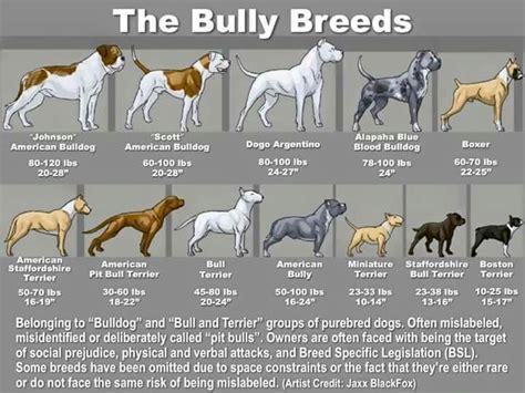 breed bully bully breed chart dogs bullies the o jays and charts