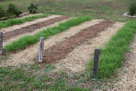 World Garden Farms by How To Plant A Green Manure Crop This To Recharge