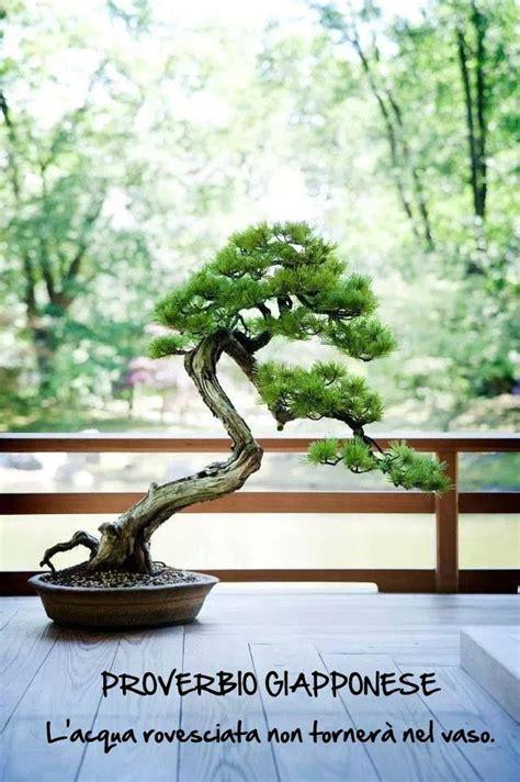 vasi bonsai giapponesi bonsai proverbio giapponese bonsai