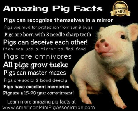 new year pig facts 25 best memes about omnivores omnivores memes