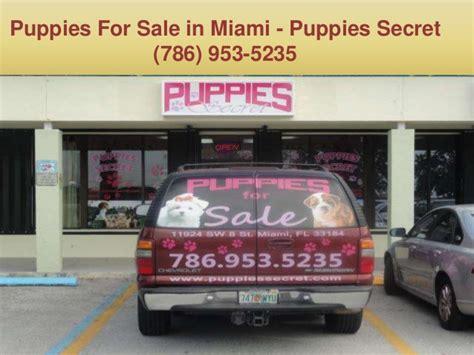 puppy store miami puppies in miami fl