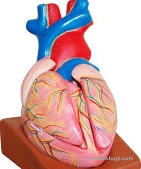 jual phantom model jantung murah