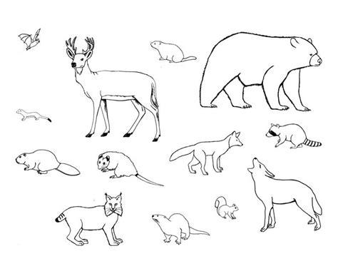 imagenes animales vertebrados para colorear animales vertebrados mamiferos para colorear imagui