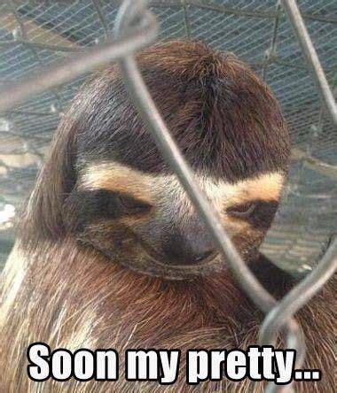 Pervy Sloth Meme - 17 best ideas about sloth memes on pinterest are sloths
