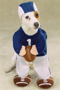 dogs halloween costume 30 halloween costumes for dogs that will put a smile on