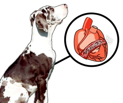 heartworm in dogs giardia in dogs cats and humans
