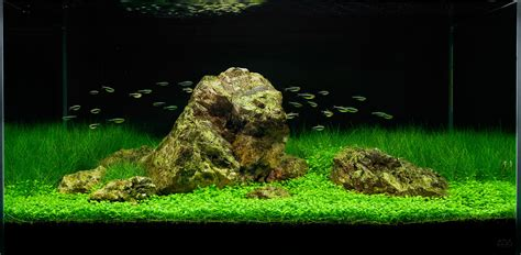 a tranquil aquascape in the ada 90 p live planted