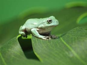 Interior Design Ideas Small Living Room by Introduction And Care Of Pet White S Tree Frogs