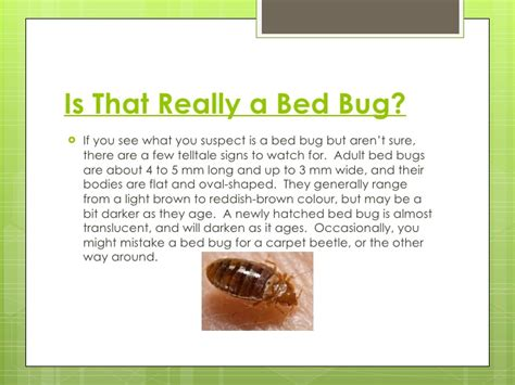 how to search for bed bugs the truth about bed bugs