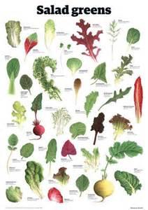 salad greens by guardian wallchart botanical pinterest