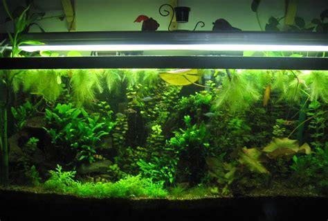 lighting for 55 gallon planted tank phuunkee1 s planted tanks photo id 3646 version