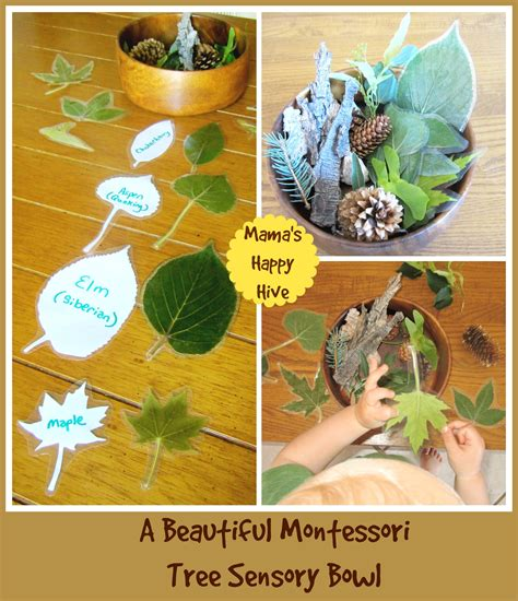 montessori tree printable botany 101 for toddlers our study of trees mama s happy