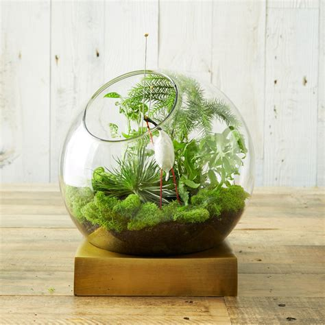 Indian Home Decor Stores by Brass Base Terrarium