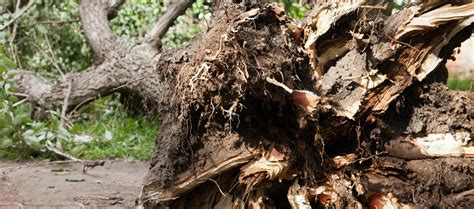 home insurance trees close to three things to know about fallen trees and business insurance l erie insurance