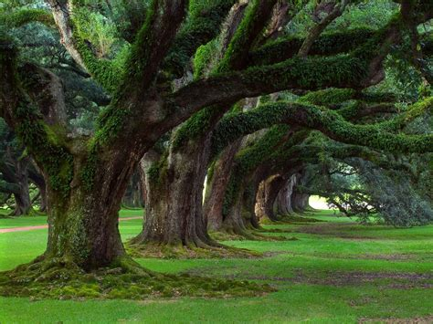 amazing tree beautiful nature wallpapers with trees and grass