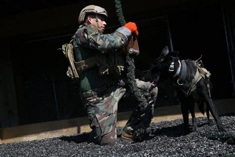 green liquor handling dvids news marsoc multi purpose canine handlers for the unforeseen