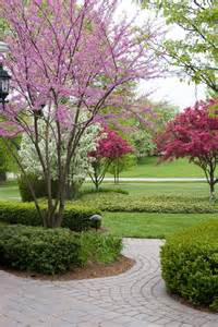 Decorative Trees For The Home Top 10 Dwarf Ornamental Trees For The Landscape