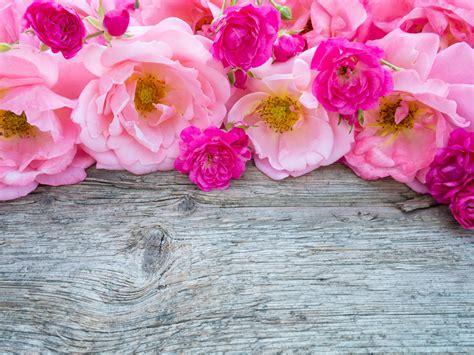 imagenes rosas color fondos de pantalla rosas muchas rosa color flores