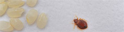 bed bug removal cost bed bug treatment cost blowing rock bed bug removal