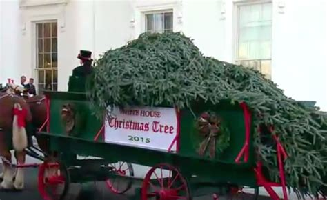 white house tree see the white house tree get hauled in from