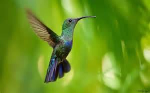photos de guadeloupe au jardin des colibris