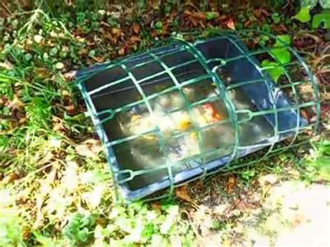 zanzare in giardino problema zanzare in giardino eliminato