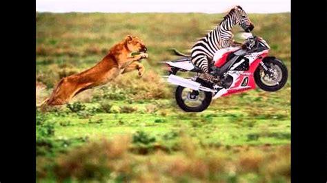 imagenes interesantes de animales animales graciosos y curiosos youtube
