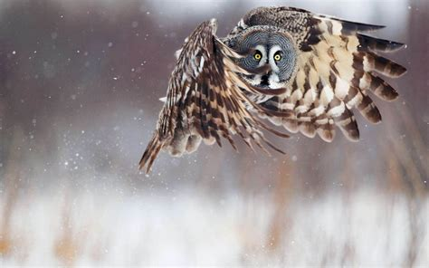 owl wallpapers  psd vector eps