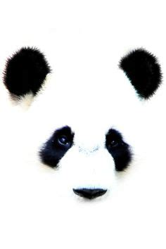 my daughters panda tattoo panda stuff pinterest panda bear drawing by lethalchris on deviantart tattoo