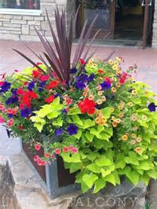 Plant Combination Ideas For Container Gardens 25 Best Ideas About Sweet Potato Vines On Potato Vines Outdoor Pots And Planters