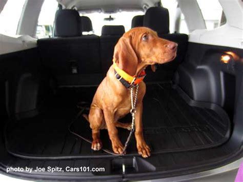 dogs 101 vizsla subaru and photographs subaru owners their dogs