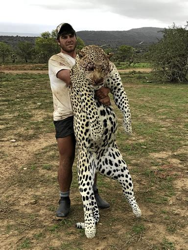 catfight right to hunt sa s leopards