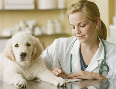 how to keep dogs how to keep your healthy 8 significant factors
