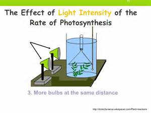 How Does Light Intensity Affect Photosynthesis by Igcse 2 10 Rate Limiting Factors In Photosynthesis Ms