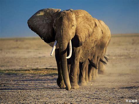 National Geographic Wildlife national geographic 100 best wildlife national