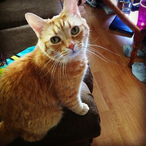 10 Things Ive Learned From Living With Cats by 10 Things I Ve Learned From A Chronically Ill Cat