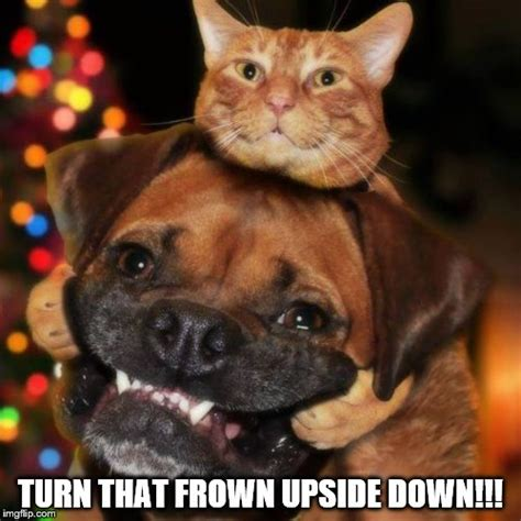 Frown Cat Meme - friday 11 06 2017 it s national smile week the daily