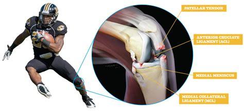 On Interior Of Knee by Inside Knee Ligaments Car Interior Design