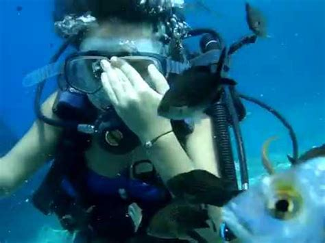 Scuba Mix scuba diving sch 214 ne tauchfilm mix g 220 zel dali蝙 2