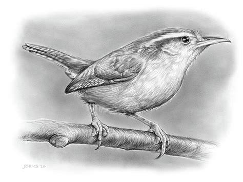 Carolina Wren Drawing carolina wren drawing by greg joens