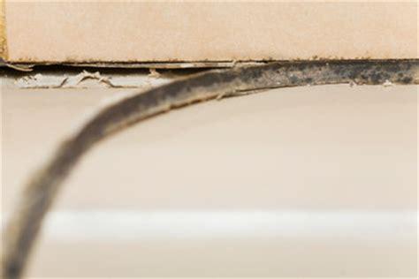 schimmel in silikonfugen entfernen schimmel in der dusche entfernen so geht s