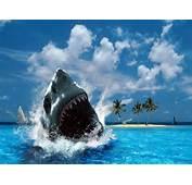 Shark Wallpapers With Sea Backgrounds Suitable For Adventures Desktop