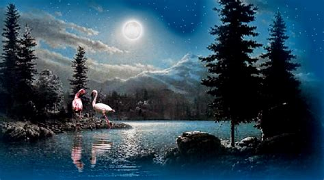 beautiful images moon light and background with trees nature