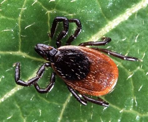 get rid ticks backyard how to get rid of ticks effectively a review of the best