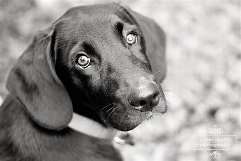 imagenes a blanco y negro de perros 191 los perros ven en blanco y negro lenticom